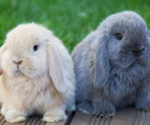 Consejos Para Mantener Limpio Al Conejo