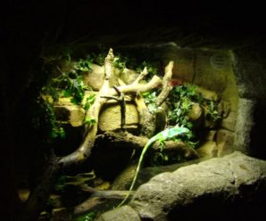 ¿Cómo hacer un terrario para iguanas? ¡Infórmate!