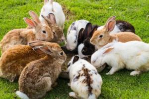 razones por las que mi conejo no hace popo