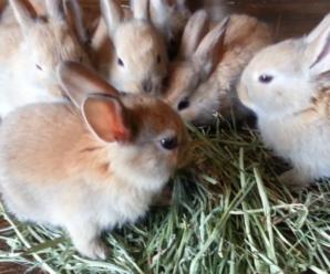 Alimentación correcta de los conejos