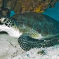 Como duermen las tortugas marinas y dónde