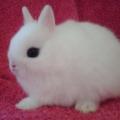 Conoce las diferentes razas de conejos domésticos