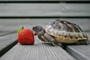 cuidados de tortuga
