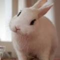 Como saber si mi conejo tiene tumor