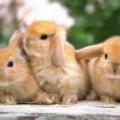 Razones por las que mi conejo tiembla