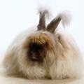 Alergias en conejos