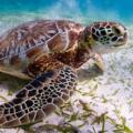 ¿Las tortugas escuchan? ¿cómo ven? Los sentidos de las tortugas