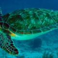 Principales diferencias entre tortuga de agua y tortuga de tierra