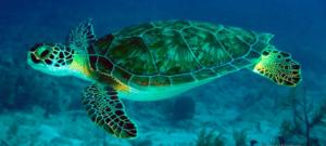 tortuga de agua diferencia