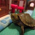 Que artículos necesito tener en casa para tener una tortuga