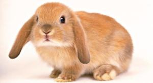ventajas y desventajas de tener un conejo