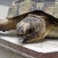 Neumonía en tortugas | causas, síntomas y tratamientos
