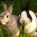 Mi conejo pierde peso ¿Cómo ayudarle?