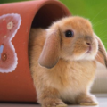 Cuidados de un conejo en departamento