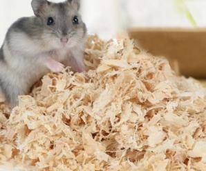 Como eliminar el mal olor de un hámster | Como evitar el mal olor