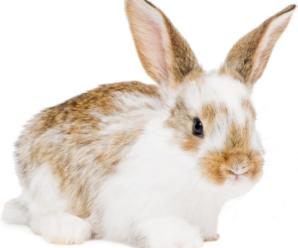 Cosas que debes evitar hacer con un conejo