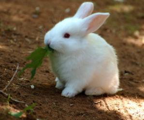 Todo sobre los dientes de conejos