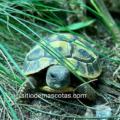Como saber si la tortuga es feliz | Aprende a tenerla contenta