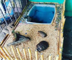 Crea la casa o terrario para tortuga de tierra fácil y rápido