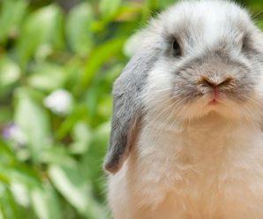 Como saber si mi conejo es feliz