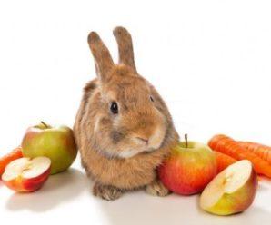 Alimentos que no debe comer un conejo