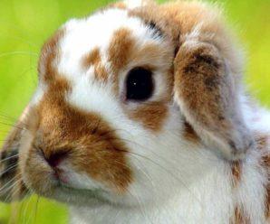 Conejos con pulgas   ¡Descubre como eliminarlas!