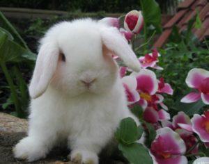 enfermedades más comunes en conejos