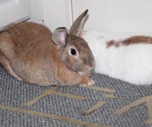 ¿Cómo cuidar a un conejo en invierno?