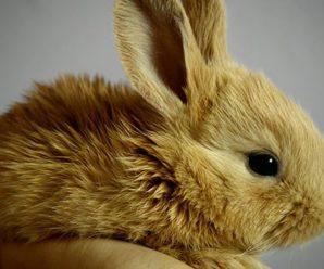 ¿Cómo ganarse la confianza de un conejo?