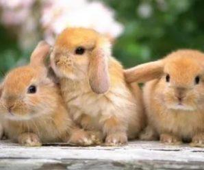 ¿Cómo saber si mi conejo se está muriendo?