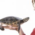 Como saber si la tortuga quiere a su dueño