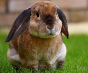 ¿Por qué mi conejo es agresivo?