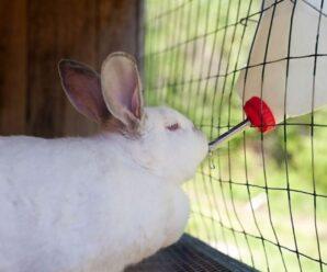 ¿Por qué mi conejo no toma agua? Consecuencias