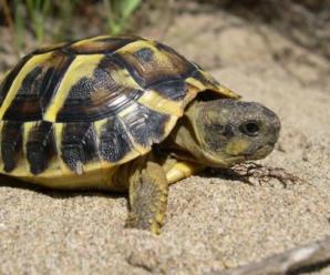 Preguntas frecuentes sobre las tortugas | conócelas antes de tener una