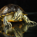 Mi tortuga saca espuma y babea por la boca