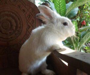 Cosas raras que hace un conejo ¿porque las hace?