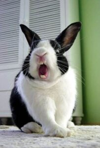 porque mi conejo me muerde