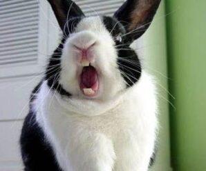 ¿Por qué mi conejo me muerde?