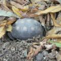 ¿Porque mi tortuga no hiberna?