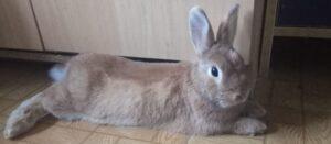 el lenguaje corporal del conejo