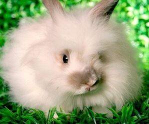 ¿Cuál es el lugar de origen del conejo?