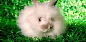 el origen del conejo