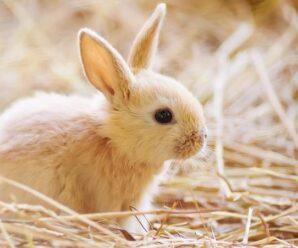 Preguntas más frecuentes de los conejos