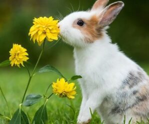 ¿Por qué mi conejo se encuentra muy triste?