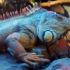 Mi iguana está abultada