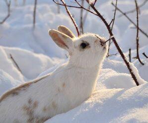 Como cuidar a un conejo durante el invierno