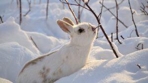 cuidar a un conejo en el invierno