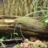 ¿Qué se necesita para tener terrarios de la iguana?