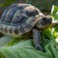 Alimentación en tortugas terrestres